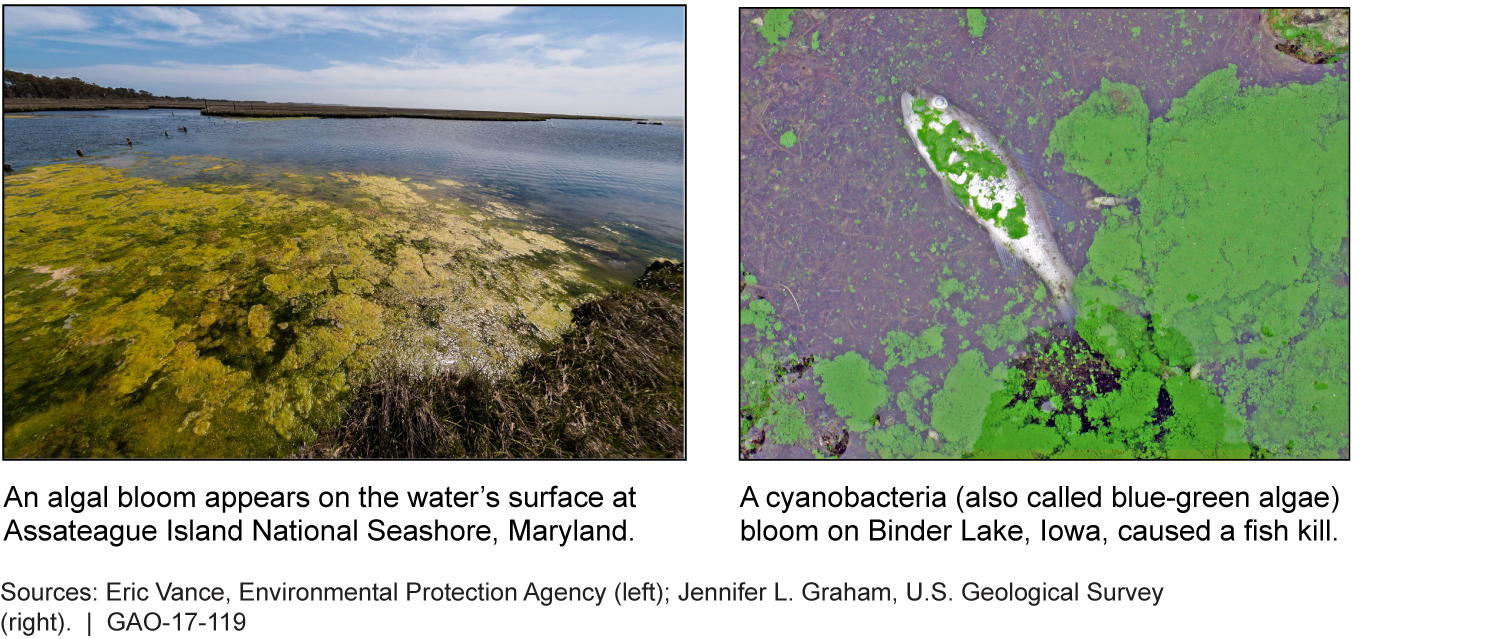 Two pictures of algal blooms, one in Maryland and one in Iowa.