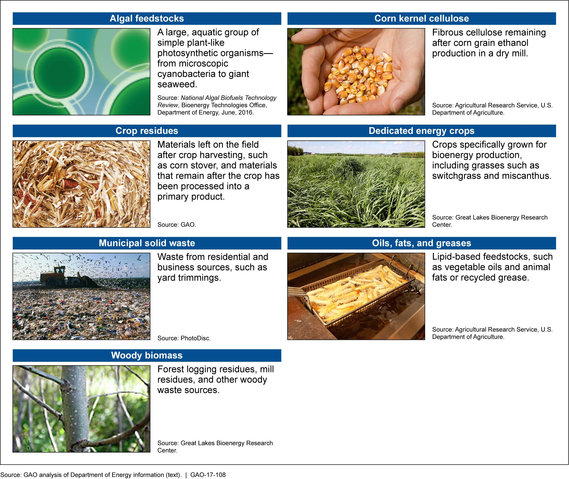 7 examples of biofuels feedstocks, including corn kernel cellulose, frying oils, and woody biomass.