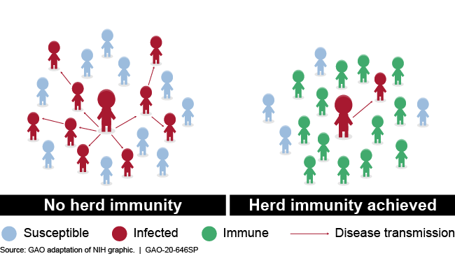 Illustration showing transmission with and without herd immunity