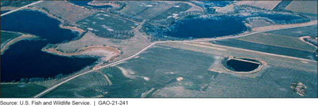 Wetlands and Cropland in the Prairie Pothole Region