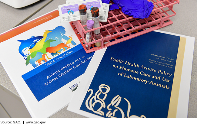 Photo of federal animal welfare policy documents, test tubes, gloves, and other lab equipment.
