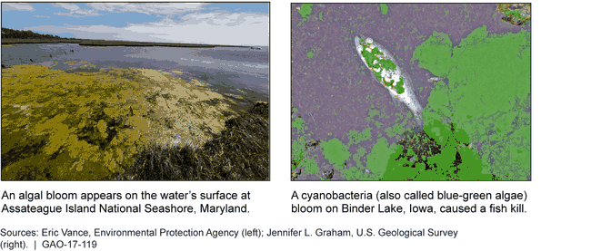 Harmful Algal Blooms Can Have Toxic Effects on the Environment and Aquatic Species